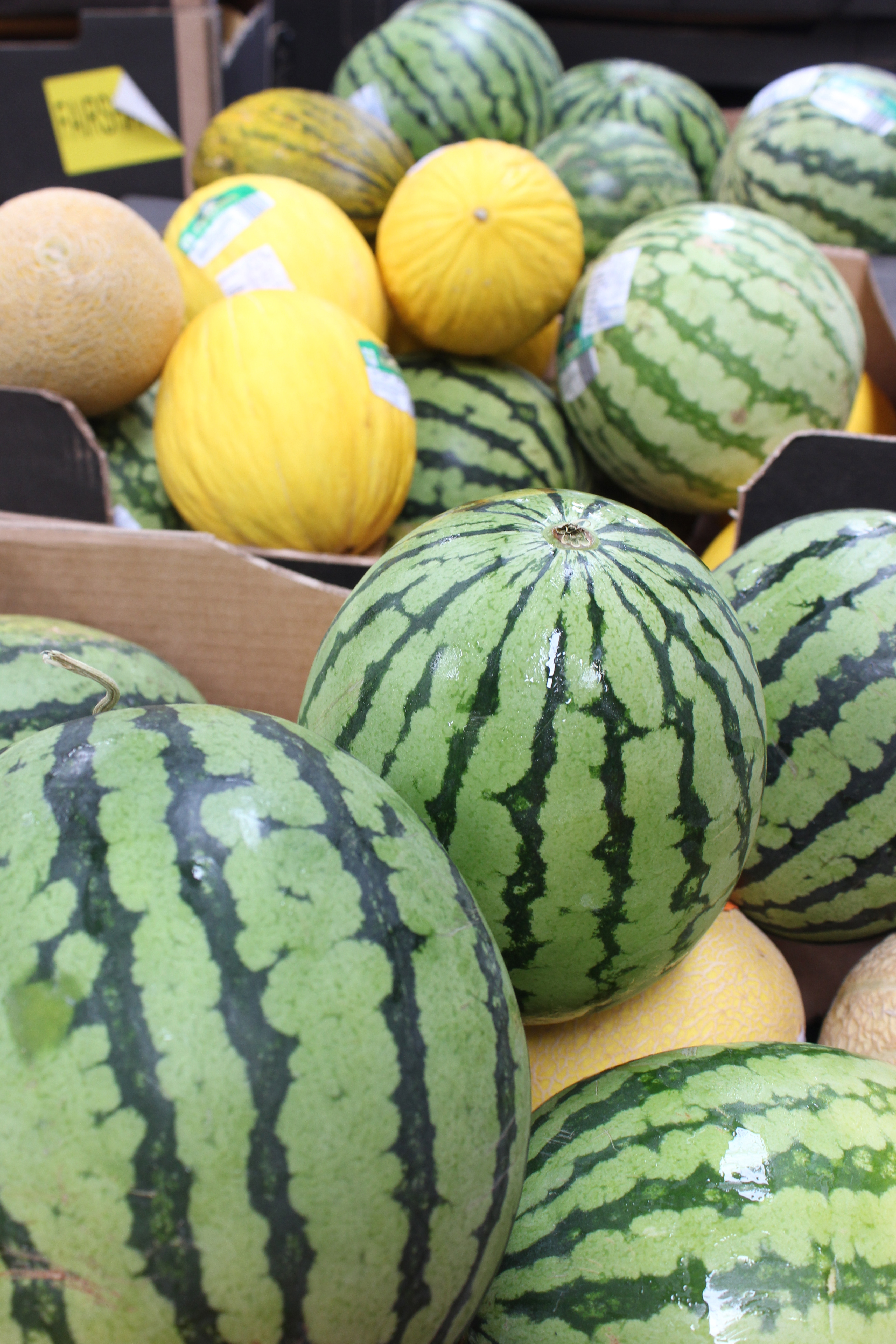 Melons from Mack at FareShare warehouse